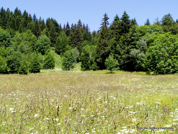 Photograph of hay meadows below la Pinéa
