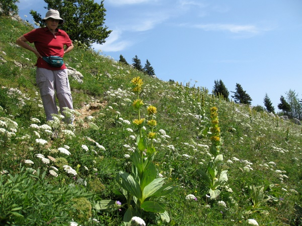 Photograph of the flora on the alpine meadows on Charmant Som