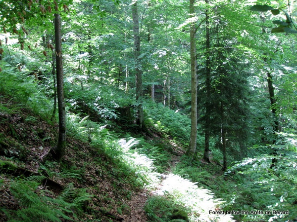 Photograph of the forests below the Ar�te de Bérard